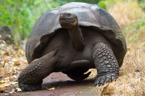 Endemische Tierarten: Was ist das und welche Vorteile haben sie?