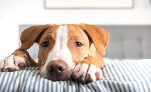 Methoden zur Entwurmung von Hunden