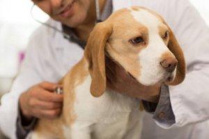 Würmer bei Hunden behandeln