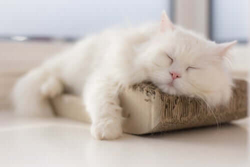 Wie man Harnwegsinfektionen bei Katzen bekämpft