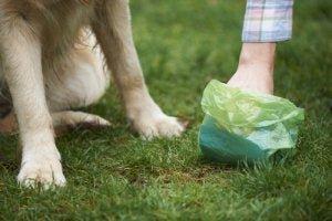 Kann Hund Salmonellen übertragen?