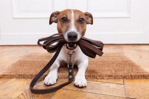 Hund will raus zum Gassi