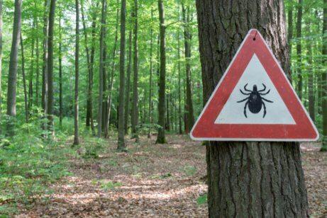 Lyme-Borreliose in Waldgebieten