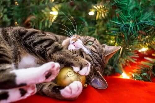 Weihnachten mit Katze