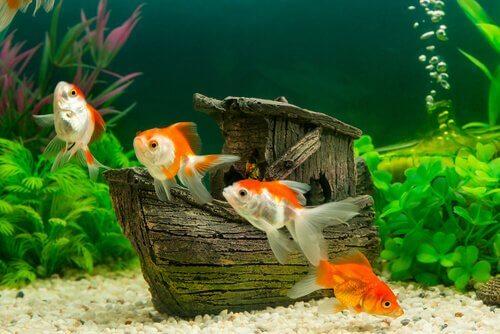 Neuzugang im Aquarium: Tipps & Ratschläge