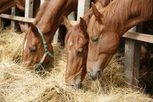 Vorsorge gegen Pferdegrippe