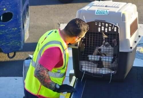 Tierschutzrecht und Reisen
