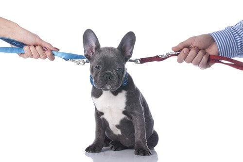 Trennung oder Scheidung: was erwartet mein Haustier?