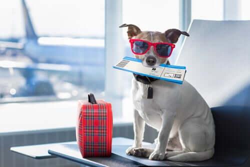 Vorbereitungen für den Flug mit dem Hund