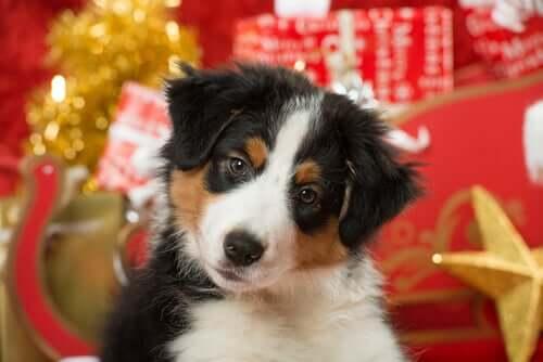 Weihnachten mit Haustier: 5 Pflegetipps