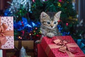 Katze zu Weihnachten