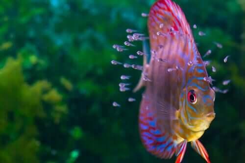 Wunderschöne Fische für dein Aquarium