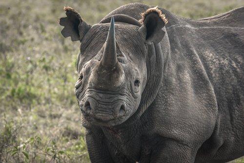 5 zum Aussterben verurteilte Tierarten
