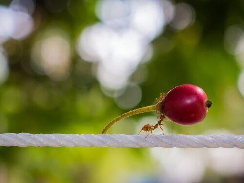 Was fressen die fleißigen Ameisen?