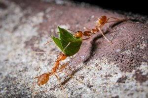 die fleißigen Ameisen an der Arbeit