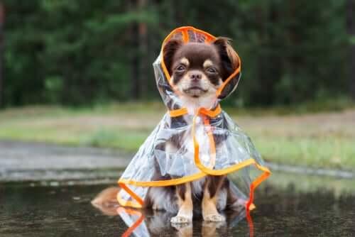 Deinen Hund vor Kälte schützen? So geht's!
