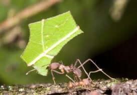 die fleißigen Ameisen