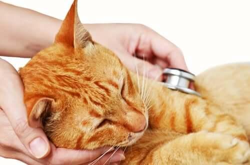 Die Mieze ist krank und wird vom Tierarzt untersucht