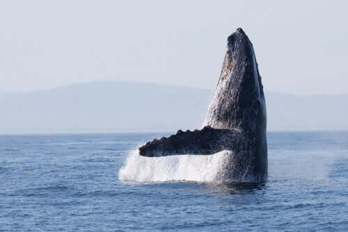 Wale nutzten vor 270.000 Jahren die gleichen Wanderrouten