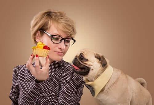 Falsche Hundeernährung
