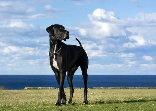 Rasseporträts: 5 große Hunderassen