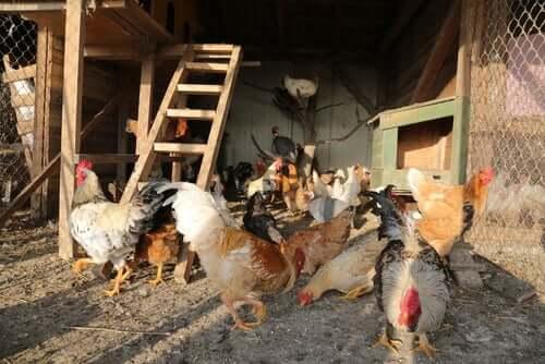 Hühnerstall mit Freigehege