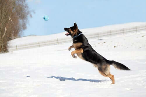 Hund springt im Schnee