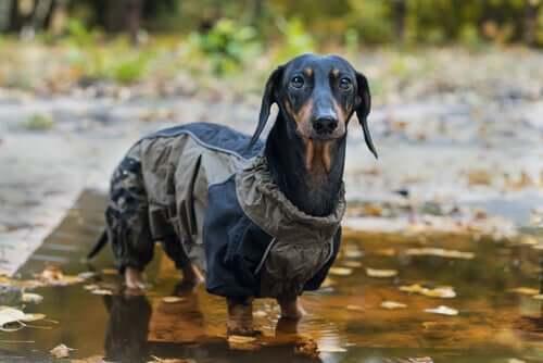 Hund vor Kälte schützen