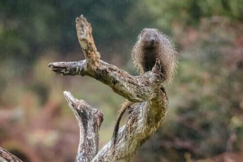 Ichneumon auf Baumstamm