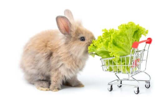 Kaninchen knabbert an einem Salatblatt