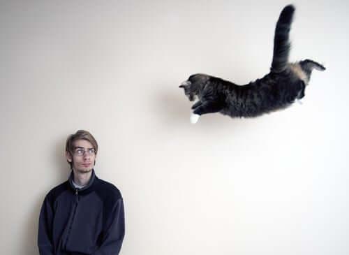 Katze macht einen Riesensprung