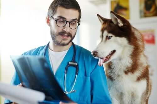 Krankheiten von Hunden, die für Menschen gefährlich sind