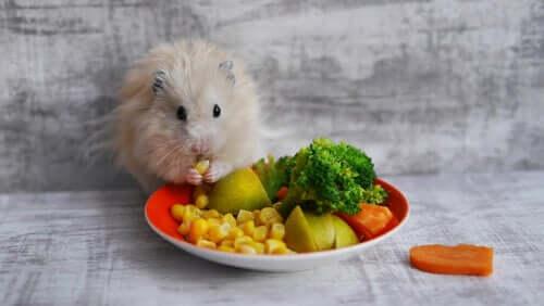 Welche Leckerbissen für Nagetiere kann man füttern?