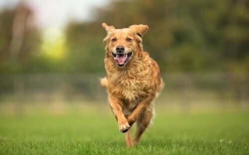 Hunde können von der Osteopathie für Tiere profitieren