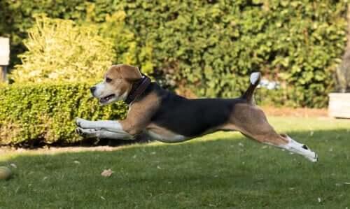 Was ist die Osteopathie für Tiere?