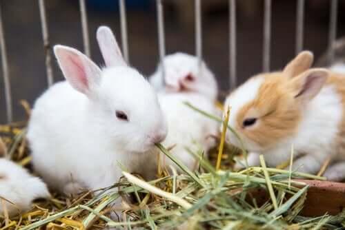 Pflanzen für dein Kaninchen: welche sind geeignetes Futtermittel?