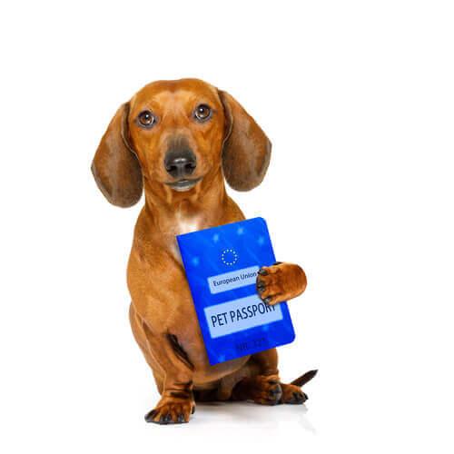 Reisen mit Haustieren: welche Dokumente braucht man innerhalb und außerhalb der EU?