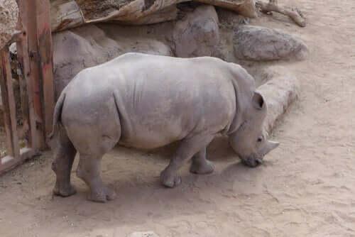 Sind alle Tiere gleich stark vom Aussterben bedroht?