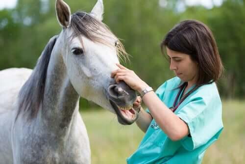 Tierärztin behandelt Pferd