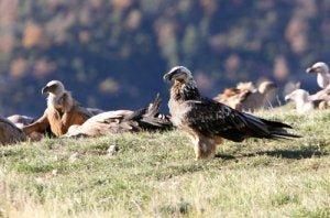 Spanien: das perfekte Ziel für Wildvögel
