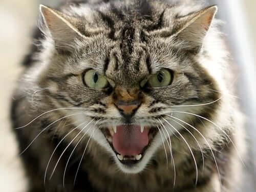 Verschiedene Arten von Aggression bei Katzen