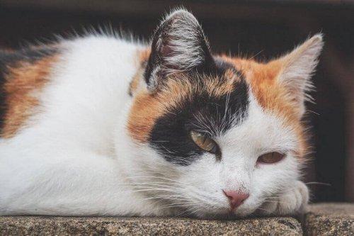 Anämie bei Katzen: Symptome und Behandlung