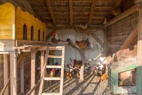 Artgerechter Hühnerstall für Hühner in der Stadt