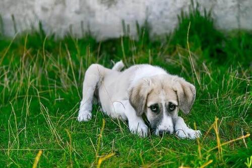 Darmflora bei Hunden oder Katzen wiederherstellen