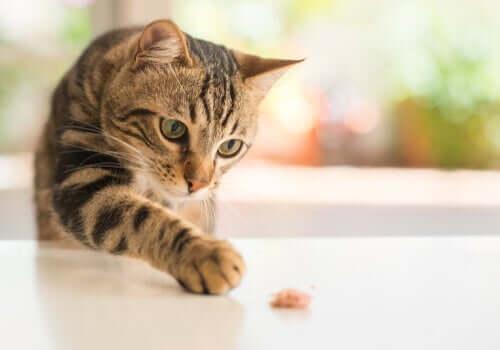 Darmflora bei Katzen wiederherstellen