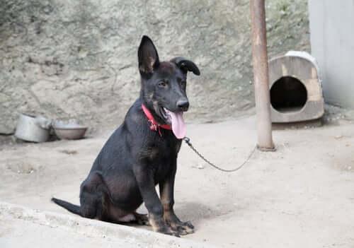 Hunde anbinden ist Tierquälerei