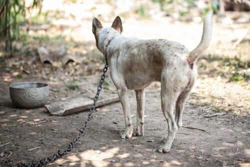 Hunde anbinden: Welche Folgen hat dieses Vorgehen?