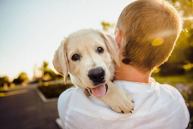 Die 5 liebevollsten Haustiere