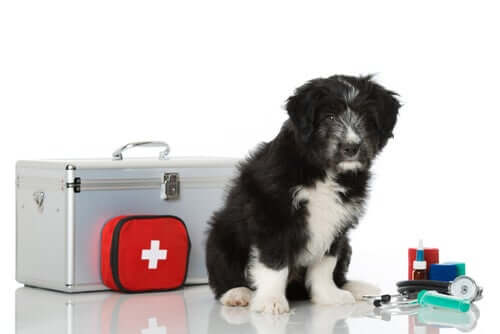 Erste-Hilfe-Set für Haustiere: Diese Dinge müssen rein!