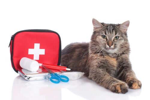Erste-Hilfe-Set fürs Haustier